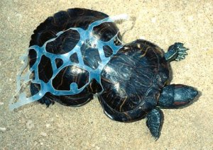 turtleplastic